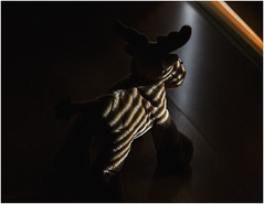 Stripes At The Horizon (xockisfriends) Tags: elchi elch moose smørrebrød light shadow athletic sweden denmark jump gymnastics diagonal potential realization