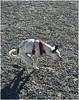 7821- OTTO ESCATOLÓGICO (--MARCO POLO--) Tags: perros animales mascotas