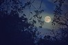 Nights like these (Abhijit Chendvankar) Tags: moon sigma nikon fullmoon india malvan revandi