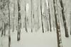 Enchantement hivernal (Gisou68Fr) Tags: hiver winter arbres trees neigeux snow markstein lemarkstein alsace grandest france canoneos650d flouintentionnel icm intentionalcameramovement intentionalblur woods