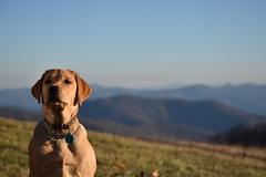 Tess in the Mountains (Hollingsworth18) Tags: