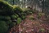 Muro de piedras en Selva de Oza (Aildrien) Tags: gree autumn musgo selva canon paraiso huesca rocas pirineos trees eos stone aragon arboles musk forest 1740 5d naturaleza otoño oza pyrenees parquenatural verde
