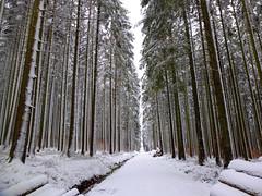 Waldspaziergang (Antje_Neufing) Tags: winter dezember schnee wald bäume tauen reinsfeld hochwald rheinlandpfalz fuji x10