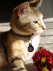 private 037 (lorablong) Tags: westhollywood california cat pet twix