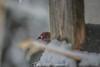 (Joshua Wells Photography) Tags: photography canoncamera t4i 650d teamcanon landscape creek nighttime night pretty subaru impreza sti wrx forester canon canonlens winter trees snow cold birds bird