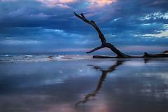 Tropical Ice (Petra Ries Images) Tags: fzuiko32mmf17 beach sea ocean mirror branch spiegelung ast wasser water meer ozean sonnenaufgang sunrise blue blau strand waves wellen ebbe