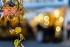 Leafes and Bokeh (*Capture the Moment*) Tags: 2017 backlight backlit blätter bokeh christmasmarket dof fotowalk gegenlicht leaf leafes munich münchen nachtaufnahmen nightshot pflanzen sonya7m2 sonya7mii sonya7mark2 sonya7ii sonyilce7m2 weihnachtsmark weihnachtsmarkt zeisssonyfe1855 bokehlicious