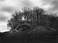 Stone-Forest (Thunderbird61) Tags: forest stone stoneforest nrw germany winter trees cliff sw zw bw nb monochrome monochrom blackwhite blackandwhite zwartwit noireblanche mediumformat pentax landscape pentax645z