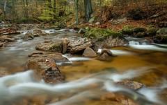 Alles im Fluss (Petra Runge) Tags: wasser bach harz ilsetal wasserfall langzeitbelichtung water creek woodland wald herbst autumn long exposure