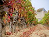 Carcassone (ZoiKoraki) Tags: wines vino grapes carcassone castle autumn