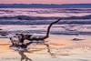 ALBADA AL DELTA DE L´EBRE (juan carlos luna monfort) Tags: amanecer tronco mar deltadelebro mediterraneo nikond7200 sigma1750 calma paz tranquilidad