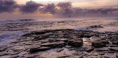 Craster. Northumberland (mandysp8) Tags: sunrise birds seagulls horizon rocks uk coastline clouds