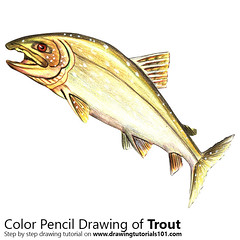 Trout with Color Pencils [Time Lapse] (drawingtutorials101.com) Tags: trout fishes freshwater fish animals animal sketch sketches sketching draw drawing drawings color colors pencil how timelapse video pencils