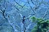 Misty Morning. (Prashob adithiruthy) Tags: pampadumsholanationalpark giantsquirrel malabar munnar morning westernghats wildlife wildlifephotography wild kerala keralatourism