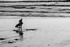 20171217 -surf_6 (Laurent_Imagery) Tags: surf surfer surfers silhouette silhouettes sand water sea ocean pacific pacificocean oceanpacific shadow wetsuit board coast coastal coastline blackandwhite blackwhite noiretblanc noirblanc noir dark swell waves editorial culture action sport lifestyle california sandiego encinitas westcoast nikon lightroom darkness winter
