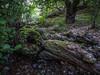 Bosque de Asturias (efe Marimon) Tags: canonpowershots120 felixmarimon asturias bosque picosdeeuropa