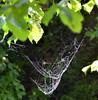 5-WetWeb (T's PL) Tags: chessienaturetrail d7000 nikond7000 nikon lexington lexingtonva spiderweb tamron18270 tamron18270mmf3563diiivcpzd nikontamron va virginia wetweb web