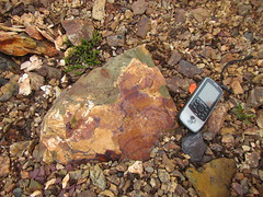 "Fossile 04 • <a style=""font-size:0.8em;"" href=""http://www.flickr.com/photos/71892547@N07/38253567694/"" target=""_blank"">View on Flickr</a>"