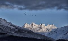 Mendenhall Towers C Geese 345 (Gillfoto) Tags: mendenhalltowers snowcappedpeaks juneau alaska