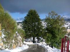 La maison au cèdre (Gilbert-Noël Sfeir Mont-Liban) Tags: kesserwan montliban liban mountlebanon lebanon winter hiver cèdre cedar arbre tree neige schnee snow route strase path road baum
