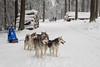 ready to go (Sabinche) Tags: winter sleigh husky dog snow