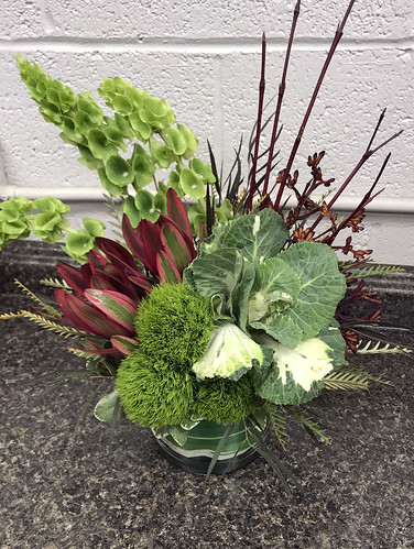 """Kale_Dogwood • <a style=""""font-size:0.8em;"""" href=""""http://www.flickr.com/photos/81396050@N06/38427172874/"""" target=""""_blank"""">View on Flickr</a>"""