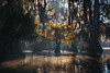 The Enlightened One (D Breezy - davidthompsonphotography.com) Tags: swamps light sunrise sunset moss spanishmoss fall autumn fallcolors glow atmospehre mood eerie mysterious drama cypress trees