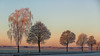 On a cold december morning (++sepp++) Tags: bayern deutschland graben landscape landschaft landschaftsfotografie lechfeld rauhreif winter hoarfrost germany bavaria bäume trees länder de greaterphotographers