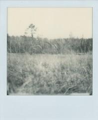 x (alex//b) Tags: 2017 polaroid polaroidoriginals sx70 instand film analog schwarzweis blackwhite coswig dresden sachsen saxony wald forest bäume trees wiese meadow willow weide