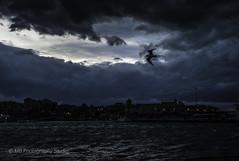 gull in the gusts (mamuangsuk) Tags: termoli molise italie it portoditermoli gabbiano stronggusts