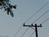Santana/SP - Espaço Leão (Paola Papini Photography) Tags: santana sp espaçoleão tree arvore planta natureza nature folhas galhos stick leaf céu cima posto poste fio