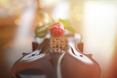 Harmony of Light... (KissThePixel) Tags: violin strings music musical instrument light sunlight bokeh goldbokeh goldenbokeh rose flower pinkrose vintage stradivarius soft softbokeh magic nikon nikondf nikkor12 f12 aperture primelens stilllife still life stilllifephotography creativeart art fineart