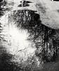 Graues Wetter (Antje_Neufing) Tags: pfütze reflektion regen bäume schwarz weis grau sw mirror fuji x10