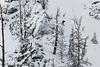 IMG_1717 (tbd513) Tags: newyears idaho snowboarding snowmobiling winter20172018