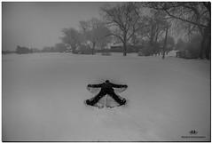 DECEMBER 2017  NGM_6820_3476-1-223 (Nick and Karen Munroe) Tags: snowangels angels angel snowfall snowstorm snow snowy winter wintertrees winterstorm wintry winterwonderland wintery canada beauty brampton beautiful brilliant blackandwhite bw blackwhite bandw monochrome mono girl girls weather women woman wife playing nikon nickmunroe nickandkarenmunroe nature nickandkaren nick nikon1424f28 1424 1424f28 14 mm zoom nikkor munroedesignsphotography munroedesigns munroephotography munroe landscape karenick23 karenick karenandnickmunroe karenmunroe karenandnick karen ontario outdoors ontariocanada