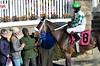 "2017-12-26 (10) r2 Elvis Trujillo on #8 No More Excuses (JLeeFleenor) Tags: photos photography ""laurel park"" maryland md ""maryland races"" horse jockey جُوكِي ""赛马骑师"" jinete ""競馬騎手"" dżokej jocheu คนขี่ม้าแข่ง jóquei žokej kilparatsastaja rennreiter fantino ""경마 기수"" жокей jokey người horses thoroughbreds equine equestrian cheval cavalo cavallo cavall caballo pferd paard perd hevonen hest hestur cal kon konj beygir capall ceffyl cuddy yarraman faras alogo soos kuda uma pfeerd koin حصان кон 马 häst άλογο סוס घोड़ा 馬 koń лошадь laurelpark marylandraces races outdoors outside winter cold"