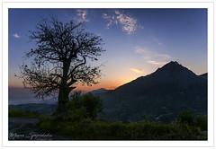 Ὁ ἀγρὸς τῶν λέξεων - Τhe field of words (MάNoS) Tags: sunset landscape tree sky mountain dusk manosspyridakis mάnos κρήτη crete photos unlimitedphotos saariysqualitypictures top20greece