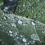 Frozen dew drops thumbnail