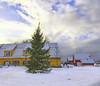 Christmas tree in Son, Norway (Ingunn Eriksen) Tags: iphone son vestby akershus norway winter christmastree christmas