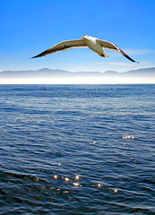 gullseasb (jamesg1545) Tags: bird giull seagull ocean sea california coast flying
