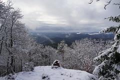 Hohe Warte (clemensgilles) Tags: rheinlandpfalz foret forest snow schnee trees wald wälder ahreifel deutschland germany eifel