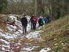 UK - Hertfordshire - Near Albury - Walking through Ashridge Estate (JulesFoto) Tags: uk england hertfordshire ramblers capitalwalkers albury ashridgeestate walking