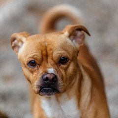 Little leggs17Dec201737.jpg (fredstrobel) Tags: dogs pawsatanta atlanta usa animals ga pets places pawsdogs decatur georgia unitedstates us