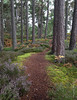 Rothiemurchus Forest (doug sinclair) Tags: rothiemurchusforest aviemore scotland highlands caledonian pines path landscape