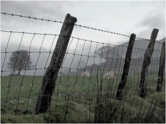 Fathew Valley (jesse1dog) Tags: fence sheep wire pasture valley fathew wales wet drizzle damp mist fencedfriday hff lf1