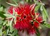 171227 171530 (friiskiwi) Tags: macroflowers