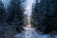 Grateful for these moments (Petr Sýkora) Tags: les sníh zima nature forest snow winter cold czech