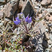 Flora - Arizona - Yavapai County