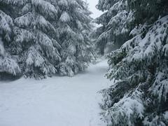 Schneepfad (Jörg Paul Kaspari) Tags: erbeskopf gipfel gipfelplataeu winter schneewanderung schnee skulpturenweg snow verschneite fichten fichte schneefichte piceaabies gipfelpfad schneepfad naturparksaarhunsrück nationalpark saarhunsrücksteig