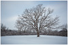 (etzel_noble) Tags: naturephotography nature winterphotography overcast lakeeriemetropark canon1740mm canon6d snowcappedtrees snow michiganwinter tree winter